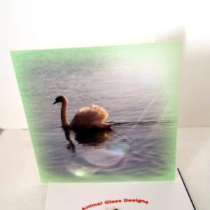 Swan greeting card with a green border and sunlight effect