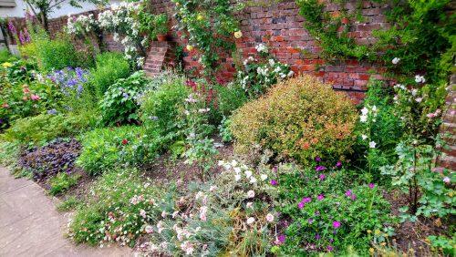 Devon garden herbaceous border
