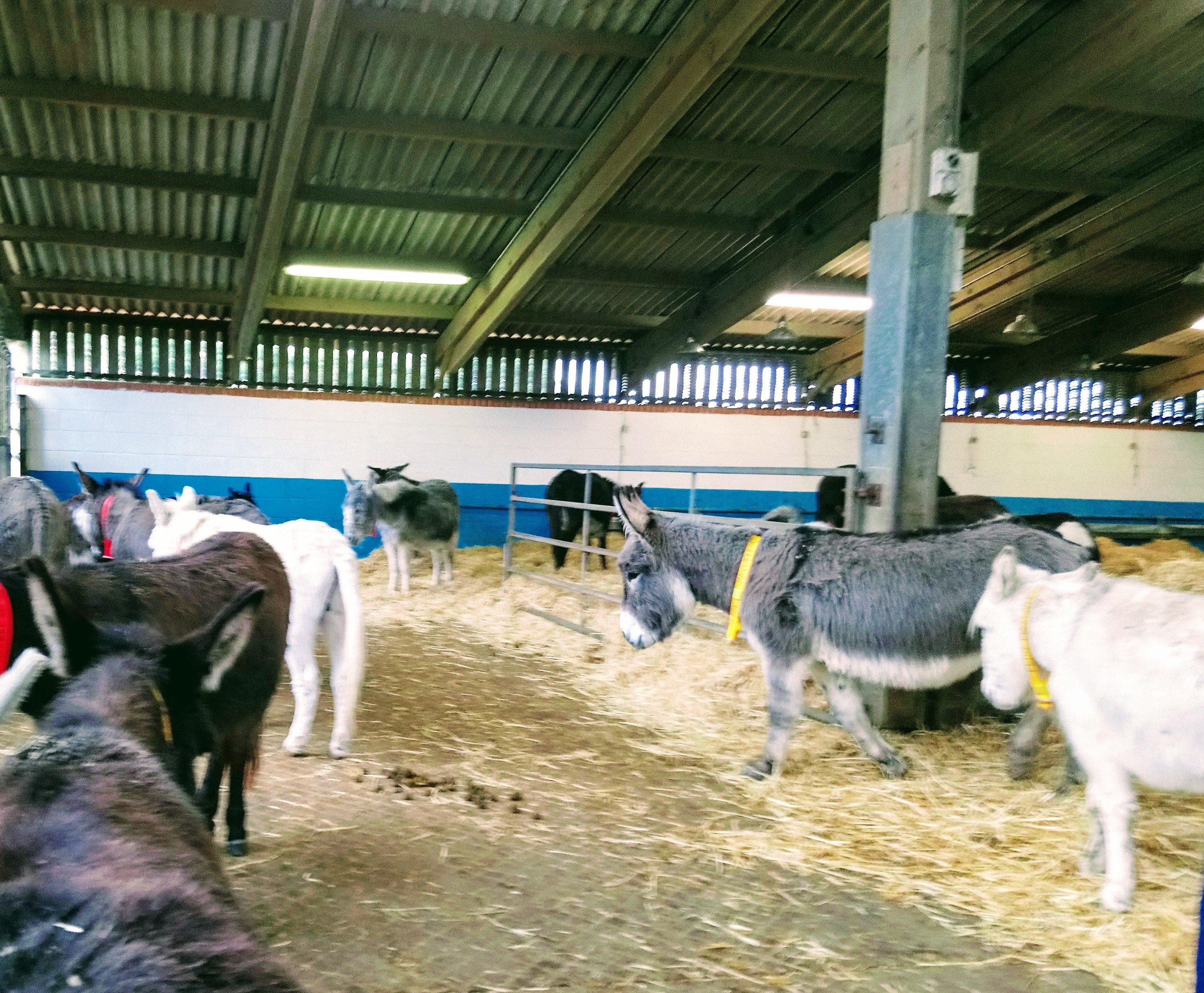 Donkeys inside at Sidmouth Donkey Sanctuary