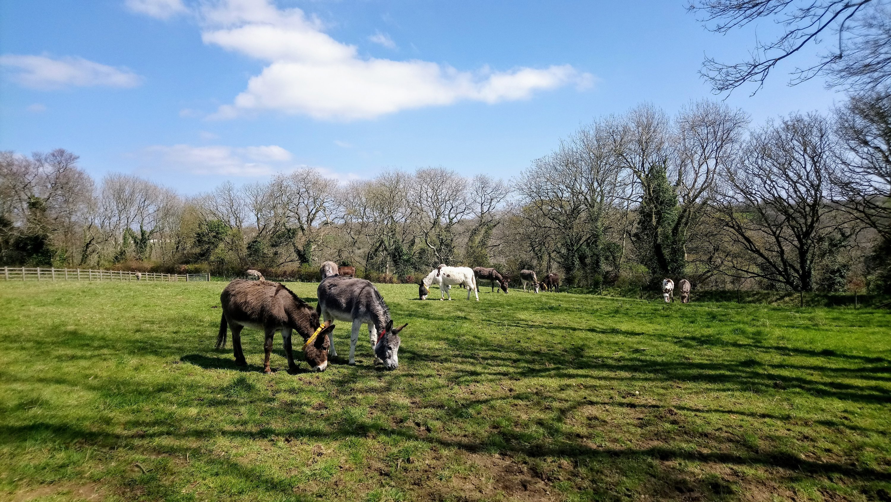 Donkeys in a field at the Sanctuary on a sunny day