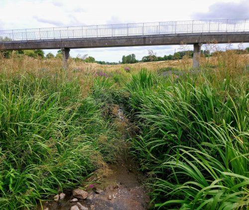 Flood defences with vegetation but little rain water.