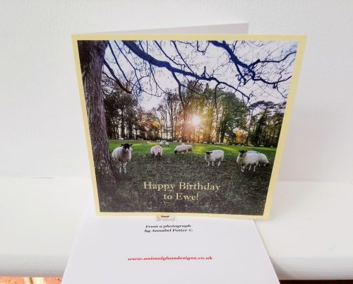Card with sheep in a field at sunset and the text Happy Birthday to Ewe!