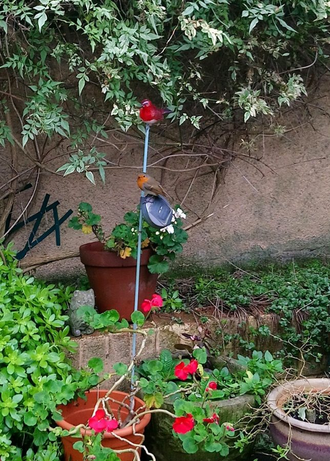 Robin bird on a robin solar light